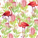 Teste padrão sem emenda do flamingo Fotografia de Stock