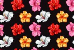 Teste padrão sem emenda do hibiscus realístico do vetor Foto de Stock
