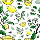Teste padrão sem emenda do limão Vetor Fotografia de Stock