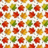 Teste padrão sem emenda do outono com folhas de bordo Fundo do vetor Fotos de Stock Royalty Free