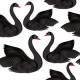 Teste padrão sem emenda do pássaro preto Fundo dos animais selvagens Cisnes da natação ilustração stock