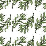 Teste padrão sem emenda do ramo de oliveira Fundo branco Ilustração do vetor Fotos de Stock Royalty Free
