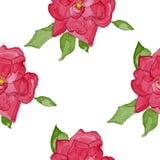 Teste padrão sem emenda do rosehip da aquarela Imagens de Stock