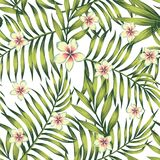 Teste padrão sem emenda do verde das folhas de palmeira do Plumeria Imagem de Stock