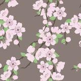 Teste padrão sem emenda do vetor bonito com sakura imagens de stock royalty free