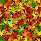 Teste padrão sem emenda do vetor com as folhas de outono coloridas Fotos de Stock Royalty Free