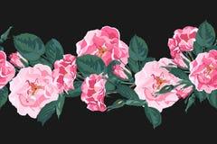 Teste padrão sem emenda do vetor com briar Flores cor-de-rosa selvagens do jardim de rosas do cão do canina de rosa ilustração stock