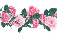 Teste padrão sem emenda do vetor com briar Flores cor-de-rosa selvagens do jardim de rosas do cão do canina de rosa ilustração do vetor