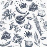 Teste padrão sem emenda do vetor com ervas e especiarias ilustração stock