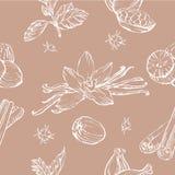 Teste padrão sem emenda do vetor com ervas e especiarias textura à moda moderna Fotografia de Stock Royalty Free