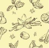 Teste padrão sem emenda do vetor com ervas e especiarias textura à moda moderna Repetindo o fundo abstrato Foto de Stock
