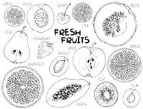 Teste padrão sem emenda do vetor com fatias do fruto ilustração stock