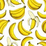 Teste padrão sem emenda do vetor da banana Estilo artístico tirado mão isolado do fruto do grupo e do verão da banana da casca Imagem de Stock