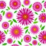 Teste padrão sem emenda do vetor das flores do purpurea do Echinacea fotografia de stock royalty free