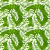 Teste padrão sem emenda do vetor das folhas de palmeira tropicais ilustração do vetor
