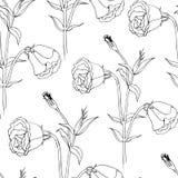 Teste padrão sem emenda do vetor floral Imagem de Stock Royalty Free