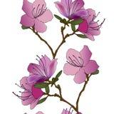 Teste padrão sem emenda do vetor do rododendro Imagem de Stock