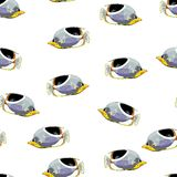 Teste padrão sem emenda do vetor tropical dos peixes Imagens de Stock Royalty Free