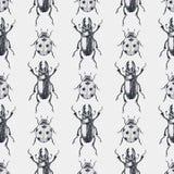 Teste padrão sem emenda do vintage dos besouros Fotos de Stock Royalty Free