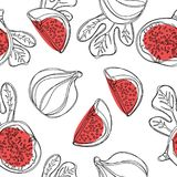 Teste padrão sem emenda dos figos frescos Frutifique com a metade e o quarto isolados no fundo branco Vetor ilustração royalty free
