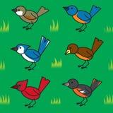 Teste padrão sem emenda dos pássaros dos desenhos animados Fotografia de Stock