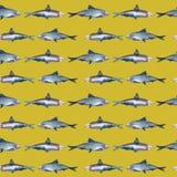 Teste padrão sem emenda dos peixes, sardinha ilustração stock