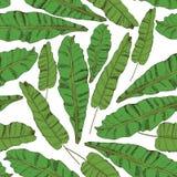 Teste padrão sem emenda floral Coleção com as folhas tropicais no estilo do esboço Imagem de Stock