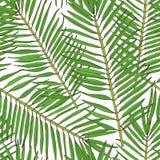 Teste padrão sem emenda floral Coleção com as folhas tropicais no estilo do esboço ilustração stock
