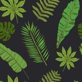 Teste padrão sem emenda floral Coleção com as folhas tropicais no sketc Imagem de Stock Royalty Free