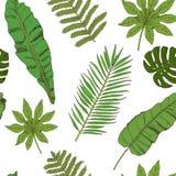 Teste padrão sem emenda floral Coleção com as folhas tropicais no sketc Foto de Stock