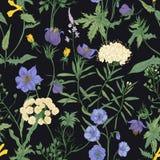 Teste padrão sem emenda floral com as flores selvagens de florescência e as plantas de florescência do prado no fundo preto flora Imagens de Stock Royalty Free