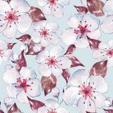 Teste padrão sem emenda floral com flores brancas ilustração royalty free