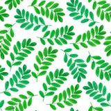 Teste padrão sem emenda floral com folhas verdes Imagem de Stock