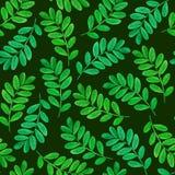 Teste padrão sem emenda floral com folhas verdes Fotografia de Stock