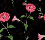 Teste padrão sem emenda floral com petúnias ilustração royalty free