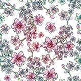 Teste padrão sem emenda floral da mola fresca no fundo branco Imagem de Stock Royalty Free