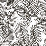Teste padrão sem emenda floral da selva das plantas tropicas Imprima o fundo do vetor de folhas de palmeira do papel de parede do Foto de Stock Royalty Free