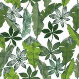 Teste padrão sem emenda floral da selva das plantas tropicas O fundo do vetor da cópia da banana da palma do papel de parede do v Foto de Stock