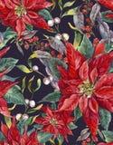 Teste padrão sem emenda floral do Natal com poinsétia Imagens de Stock