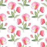 Teste padrão sem emenda floral Flores vermelhas Foto de Stock