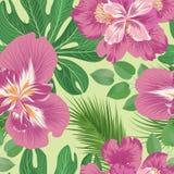 Teste padrão sem emenda floral Fundo da flor Floresça o jardim imagens de stock