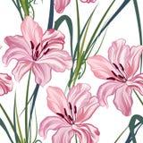 Teste padrão sem emenda floral Fundo real do lírio da flor Fotografia de Stock Royalty Free