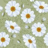 Teste padrão sem emenda floral - margarida Fotografia de Stock