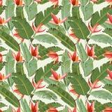 Teste padrão sem emenda Folhas de palmeira e fundo tropicais das flores Imagem de Stock