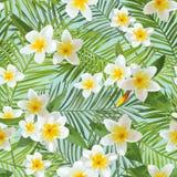 Teste padrão sem emenda Fundo tropical das folhas de palmeira Flores tropicais Imagens de Stock Royalty Free