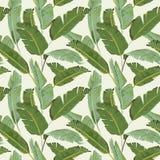 Teste padrão sem emenda Fundo tropical das folhas de palmeira Folhas da banana Imagem de Stock