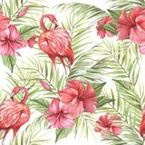 Teste padrão sem emenda isolado tropical com flamingo Ilustração da aquarela da tração da mão Imagem de Stock