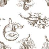 Teste padrão sem emenda O grupo de jardim frutifica estilo da gravura Isolado no fundo Ilustração tirada do estilo mão retro Fotos de Stock