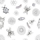 Teste padrão sem emenda preto e branco com besouros, Foto de Stock