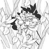 Teste padrão sem emenda preto e branco com flowers-08 Fotografia de Stock Royalty Free